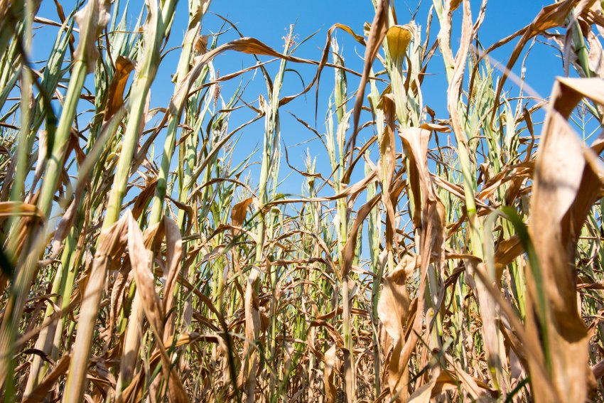 Drought is causing severe damage in Europe