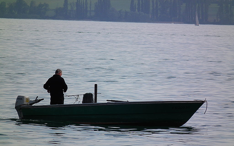 Germany: Bodensee too clean for fish