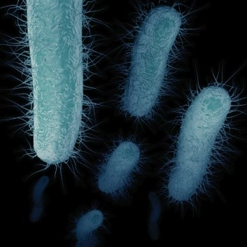 Are we higher at risk for Legionellosis due to climate change?