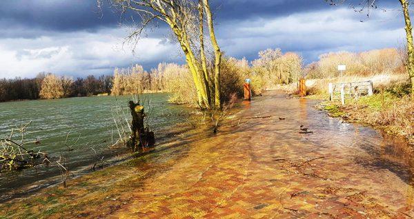 River Rhine. Photo: Water News Europe